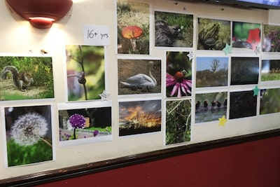 Sony DADC in the UK highlights biodiversity photography competition and insect house building at their summer event