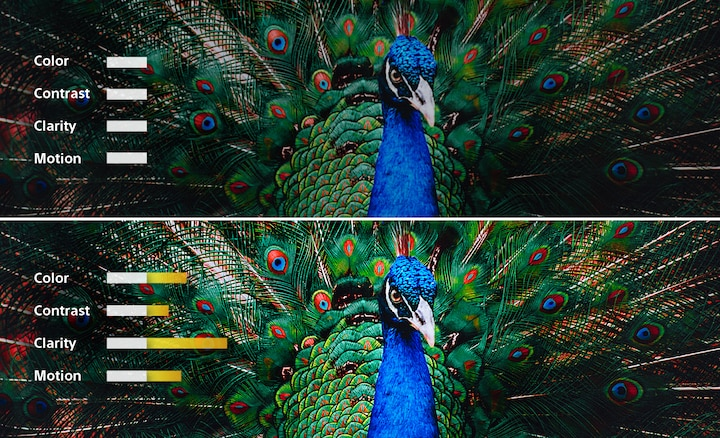 A split-screen image of a peacock showing how color, contrast, clarity, and motion are adjusted for a picture in balance