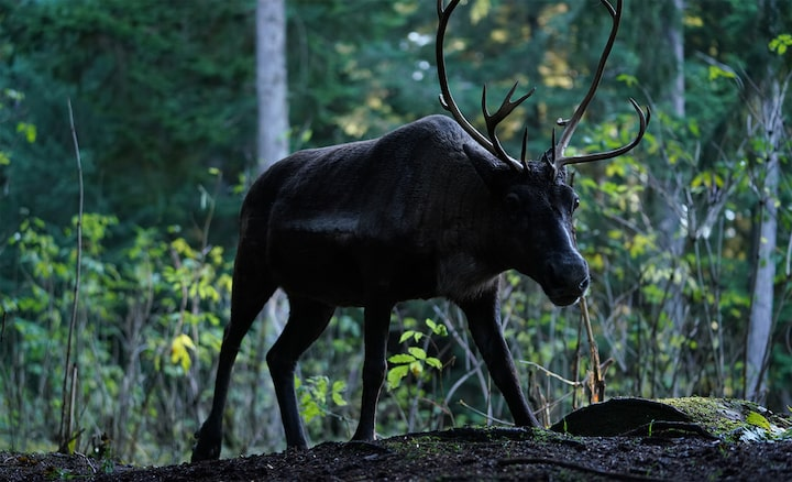 Image showing moose in silhouette against forest background