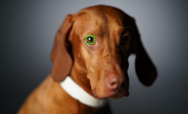 Image of a dog's face with an AF frame superimposed over one eye