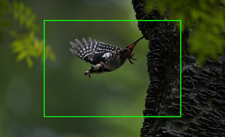 Portrait of a bird in flight, illustrating high image resolution that allows image cropping to magnify captured images