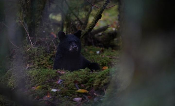 Image showing bear in dimly lit woodland environment